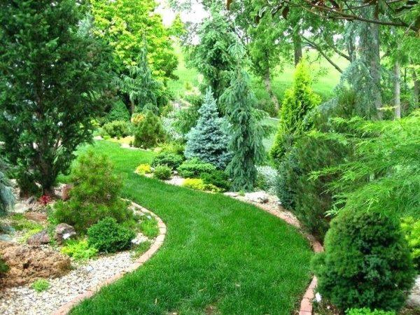 conifer-landscape-design-planet-conifer-garden-landscape-outdoor-landscape-lighting-kits