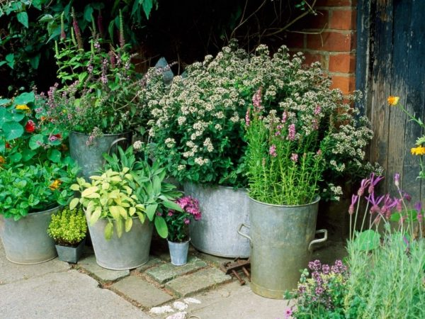 containers-plants-3