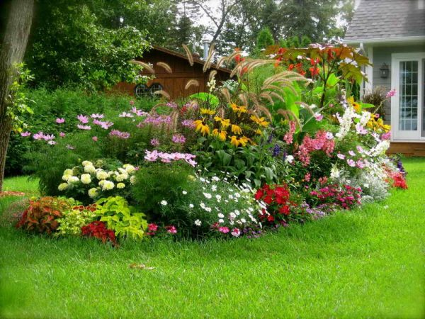 mnogoletnie-cvety-cvetushhie-vse-leto-foto-i-nazvanija