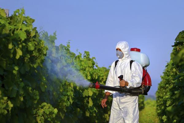 opriskivanie-vinograda