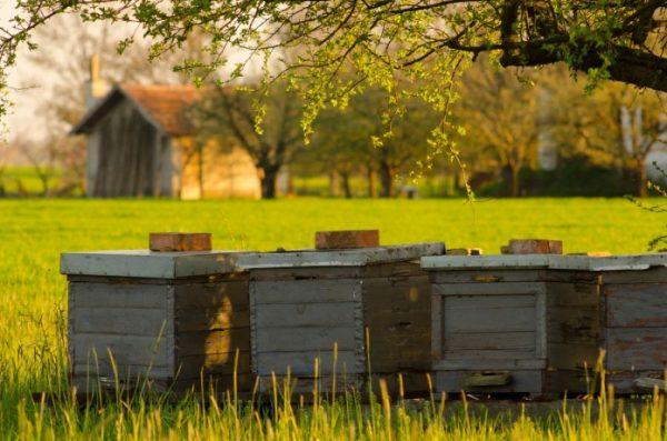 Пчеловодство в радость, или особенности ухода за пчелами без проблем