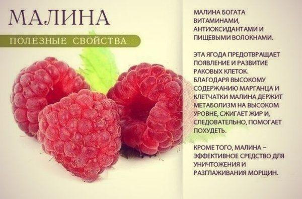 polza_maliny