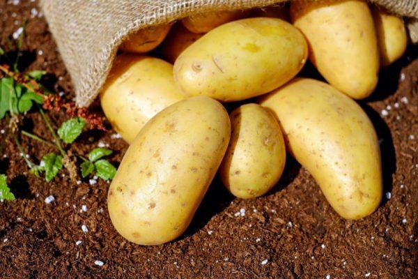 potatoes-vegetables-erdfrucht-bio-144248-e1518125140364