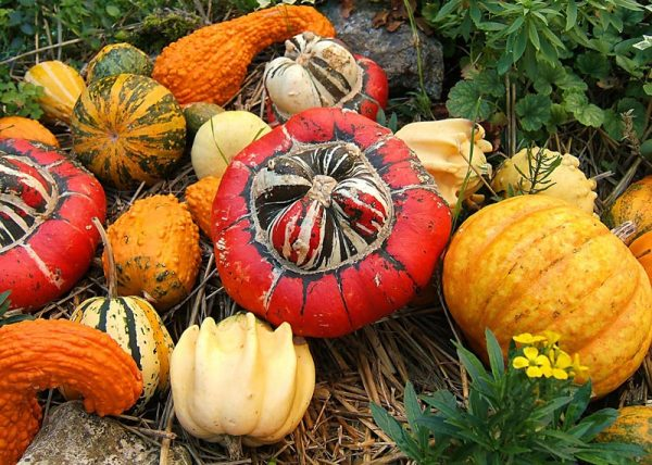 pumpkin39