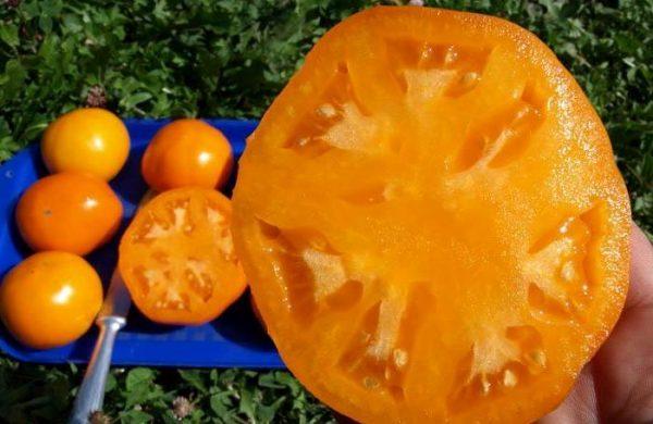 tomat-hurma-jpg