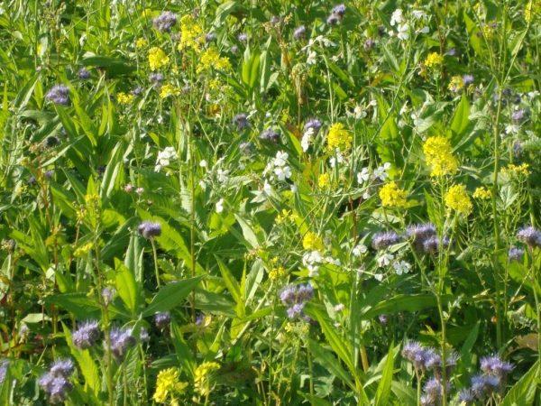 09-Green-manure