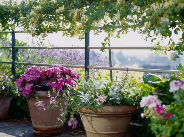 10-common-container-gardening-mistakes