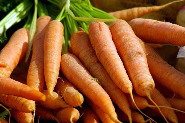 carrots-cultivar-big