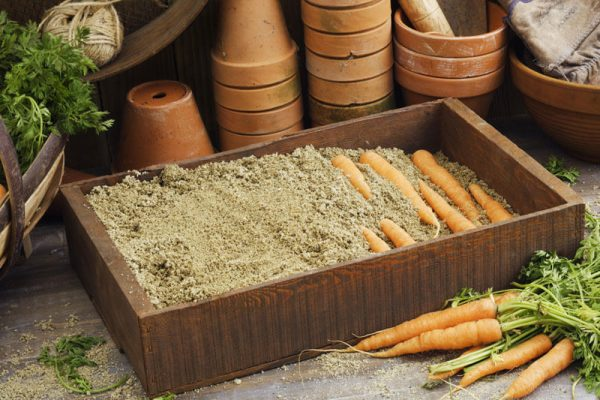 content_how-to-store-carrots__econet_ru