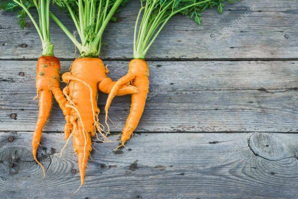 depositphotos_109612946-stock-photo-trendy-ugly-organic-carrot