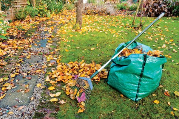 fall-rake-yard