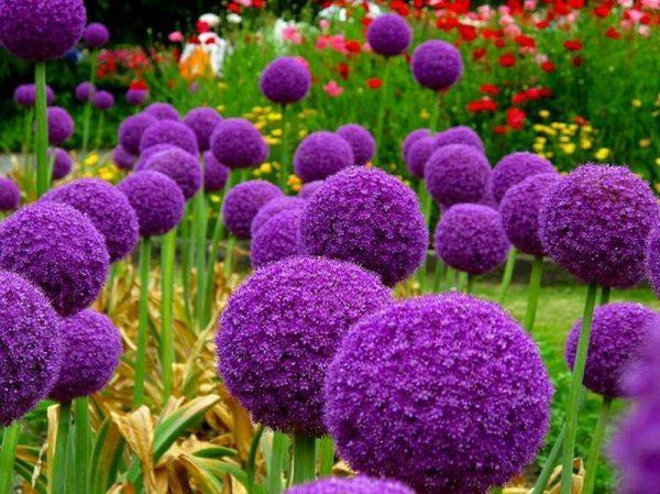 flowers1_0