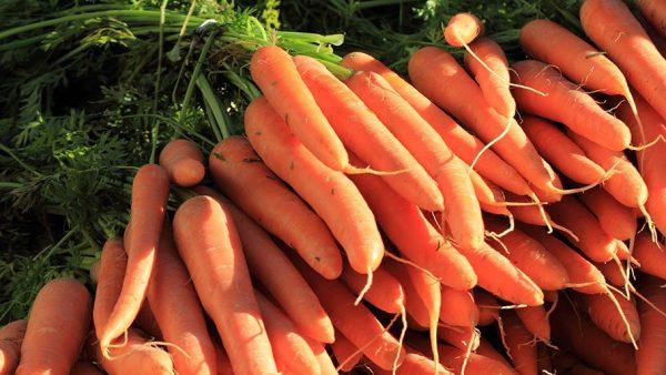 kak-hranit-morkov