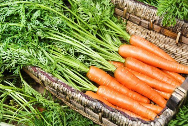 kak-hranit-morkov-rekomendacii-i-osnovnye-trebovaniya