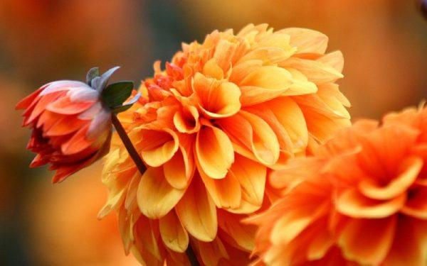 osennije-cvety