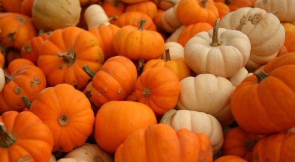pumpkin27101-767x421