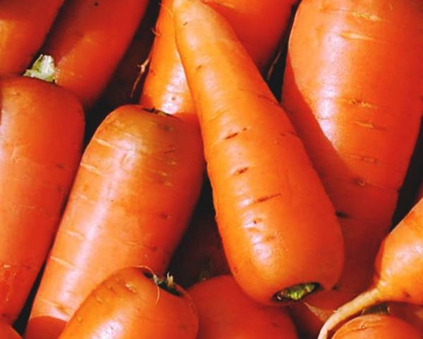 sort-morkovi-alenka