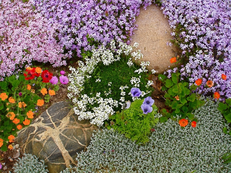 Картинки по запросу Пряные травы и альпийские растени