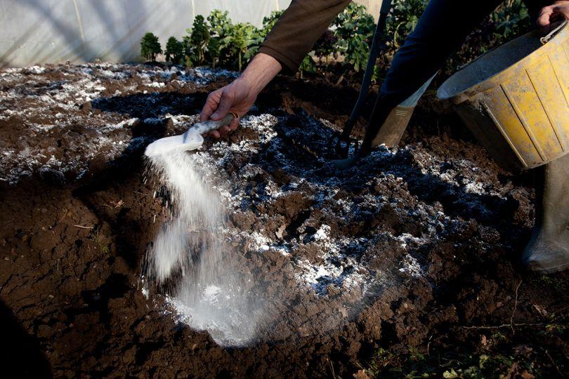Картинки по запросу как улучшить глинистую почву на своем садовом участке
