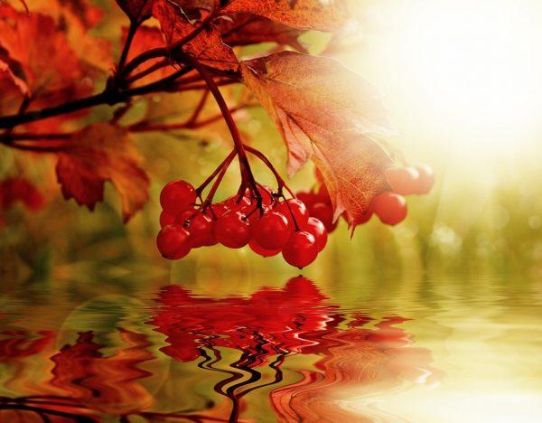 berry-217146_960_720