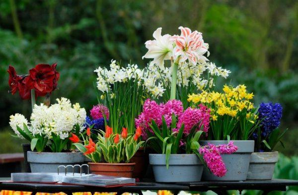 container-bulbous-flowers-5