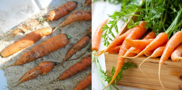 hranit-morkov