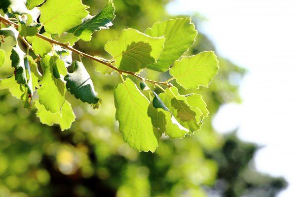 leaf_sun_f