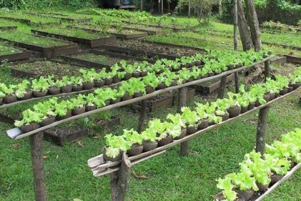organicheskoe-sadovodstvo