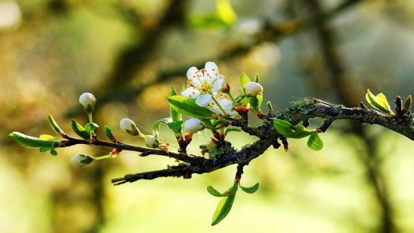 spring-wallpaper-spring-34023134-1920-1080-1
