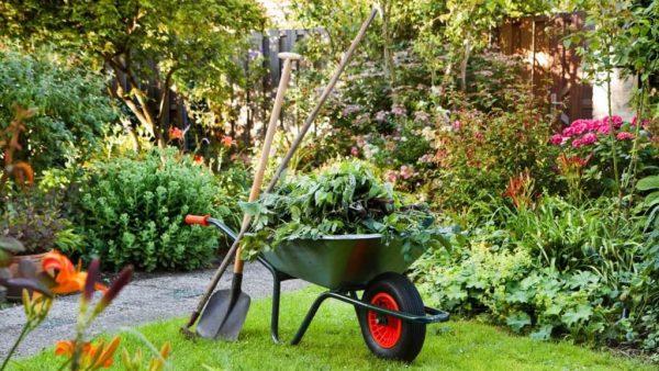 vesennie-raboty-v-sadu-profilaktika-zabolevanii-rastenii-i-zalog-khoroshego-urozhaia
