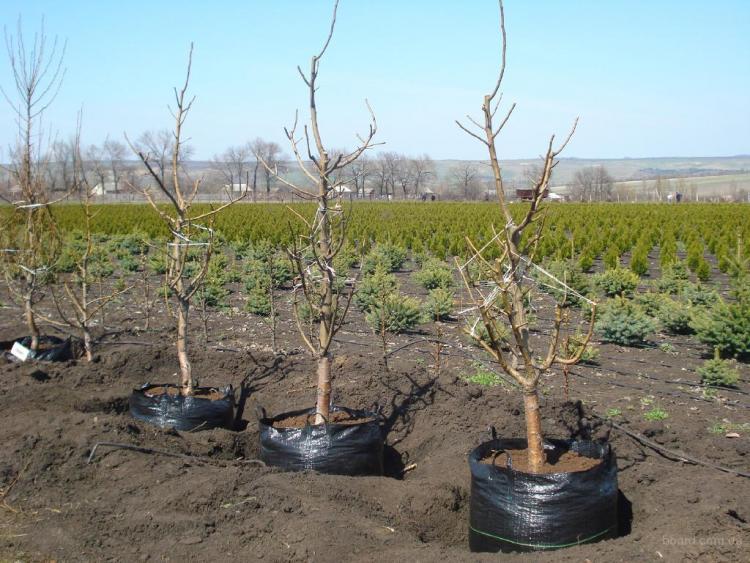 Картинки по запросу Преимущества посадки ягодных кустарников осенью