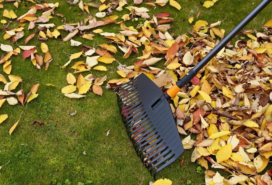 Картинки по запросу Сбор опавших листьев
