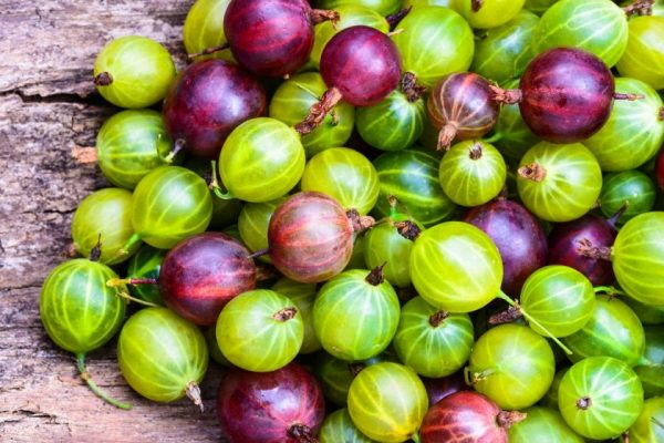 The-European-types-are-larger-and-more-flavourful-than-the-American-types-of-gooseberries.-e1517876177481