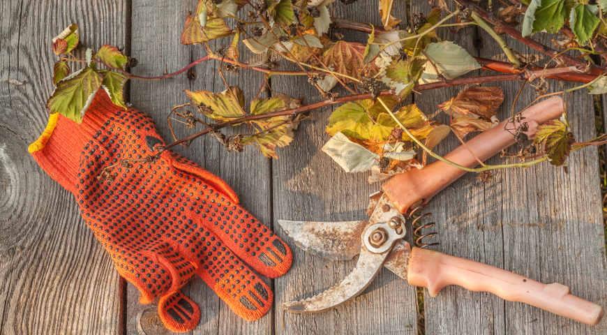 Картинки по запросу Осень – время обрезки кустарников и деревьев
