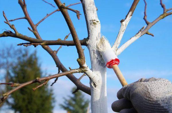 bs_Peach-tree_23