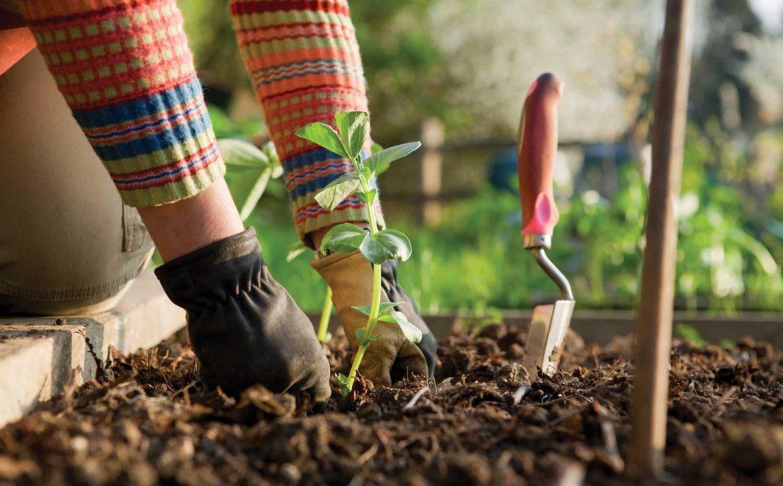 Картинки по запросу Преимущество зеленым удобрениям