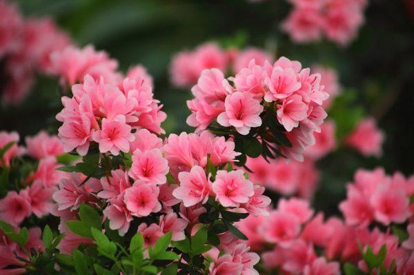 flowers-3294570_1280