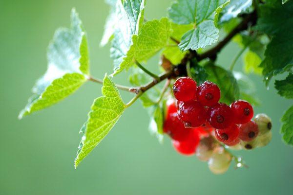 fruit-3158534_1920
