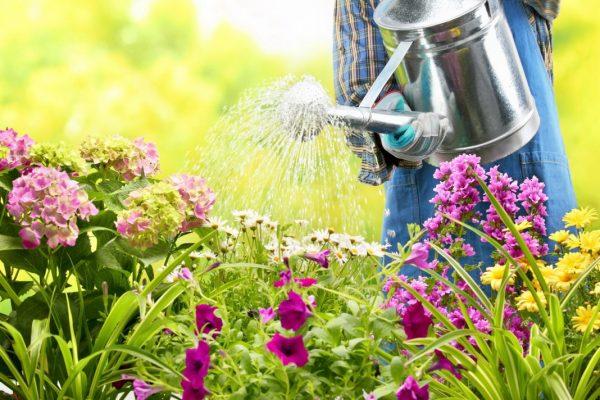 garden-watering-01