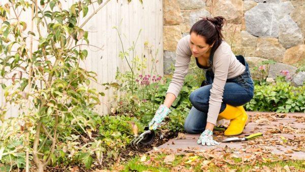 garden-wintering-1
