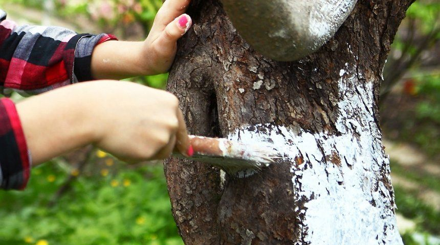 Картинки по запросу Октябрь Очистка деревьев