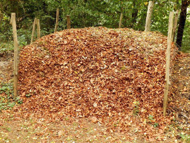 Картинки по запросу Уборка листьев в саду. Компост
