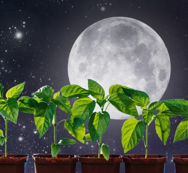 moon_kalendar-1