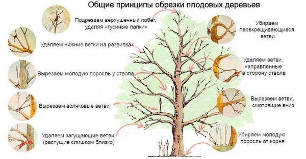 obrezka_plodovyx_dereviev.jpg.pagespeed.ce_.Y06Lim7aH6