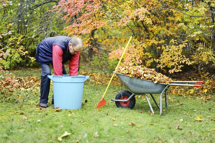 Картинки по запросу Уборка листьев в саду. Костёр
