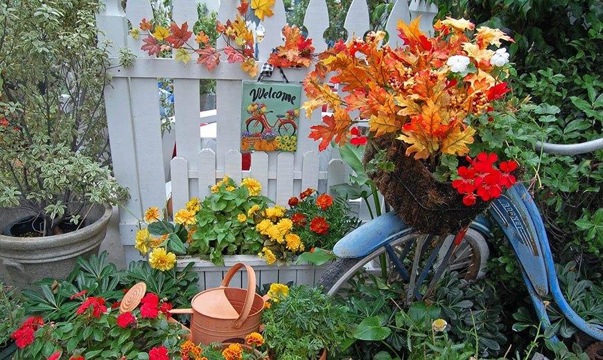 Декоративные деревья и кустарники — краски осеннего сада