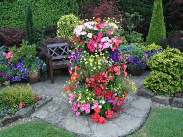 osnovnye-principa-vybora-cvetov-dlya-klumby-21