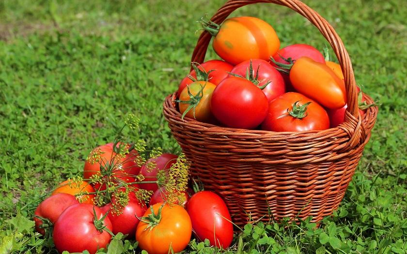Картинки по запросу Что можно сажать до, после и вместе с помидорами и как таким образом улучшить урожайность?