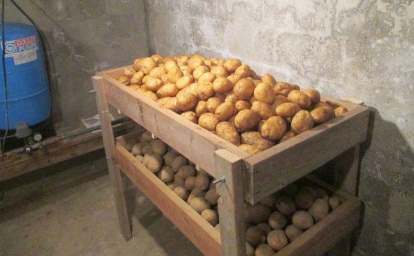potatoes-storage-06