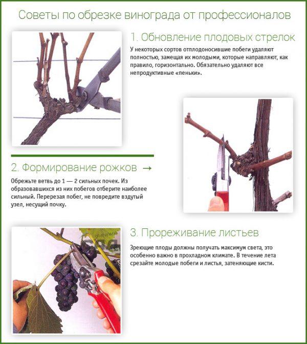 sovetyi-po-obrezke-vinograda